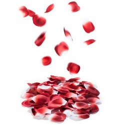 Pétales de rose amour amour
