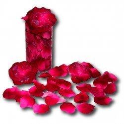 Pétales de rose fuchsia