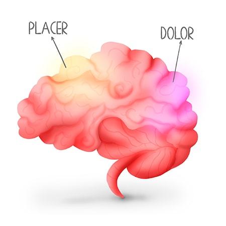 Todo en el cerebro