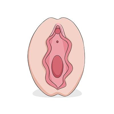 Vulva tipo ostra