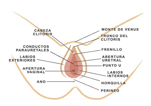 Mapa de la vulva