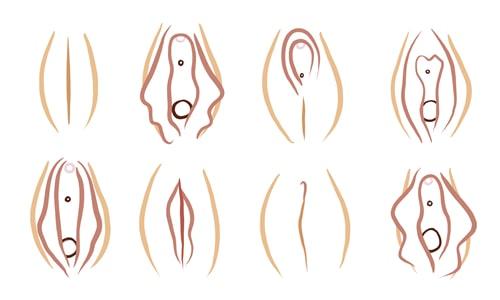 Tipos de vulva
